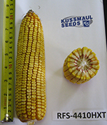 RFS-4410 HXT Silage Corn Image