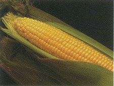 Kandy Korn Sweet Corn Image