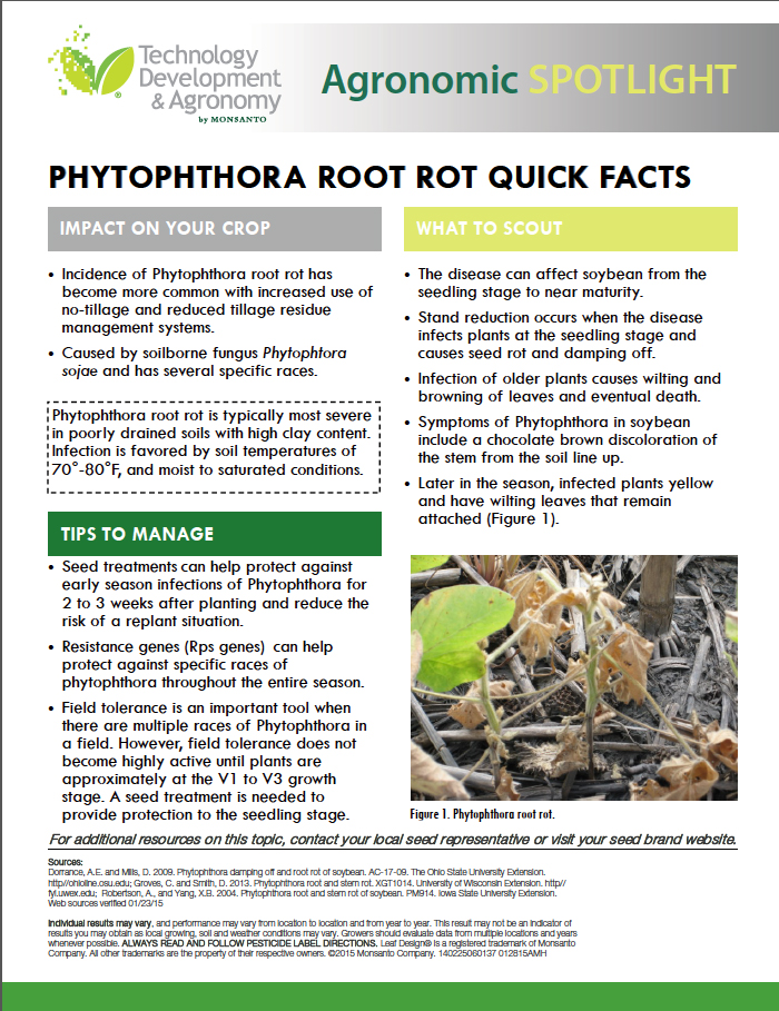 PhytophthoraRootRotFactspg1