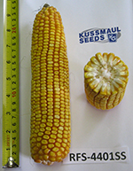 RFS-4401 SS Silage Corn Image