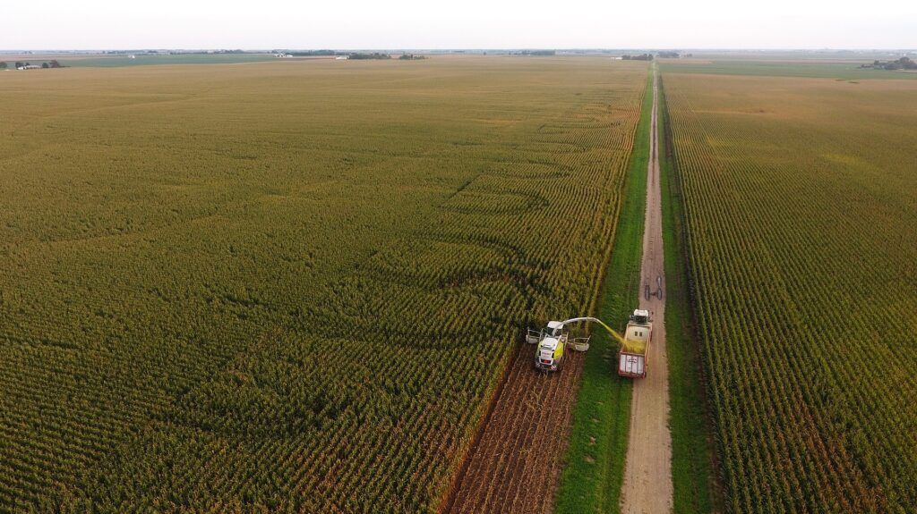 Chopping Silage-Specific Corn
