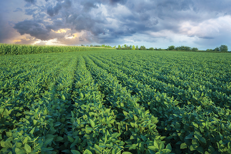 identifying soybean pests